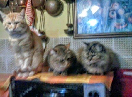 Astuzia felina e gatti