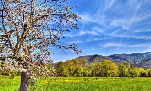 Primavera e rinascita
