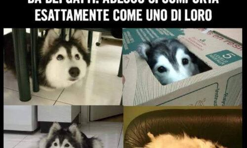 Perché i cani maschio e femmina rimangono¿